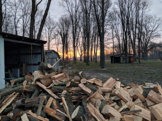 Wood cut and piled outside